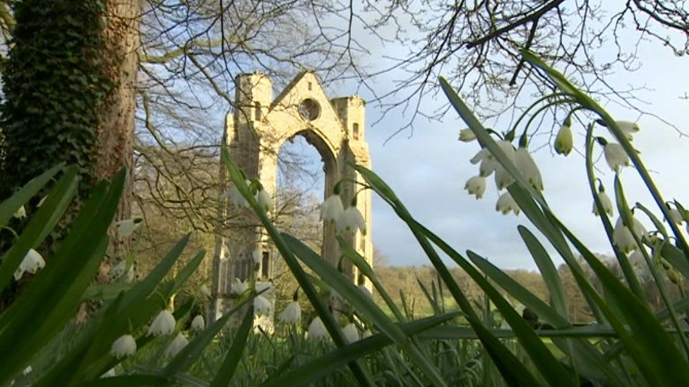 Snowdrops at Walsingham Abbey, Norfolk