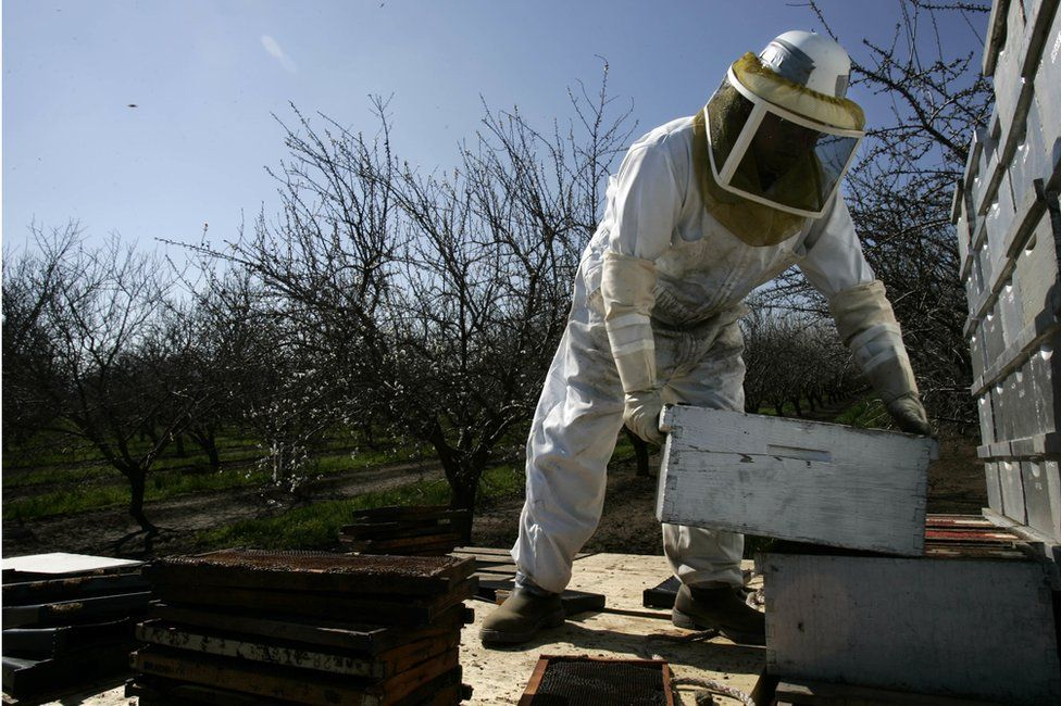 A man moves a beehive box on a truck, next to an almond orchard near Visalia, in California.