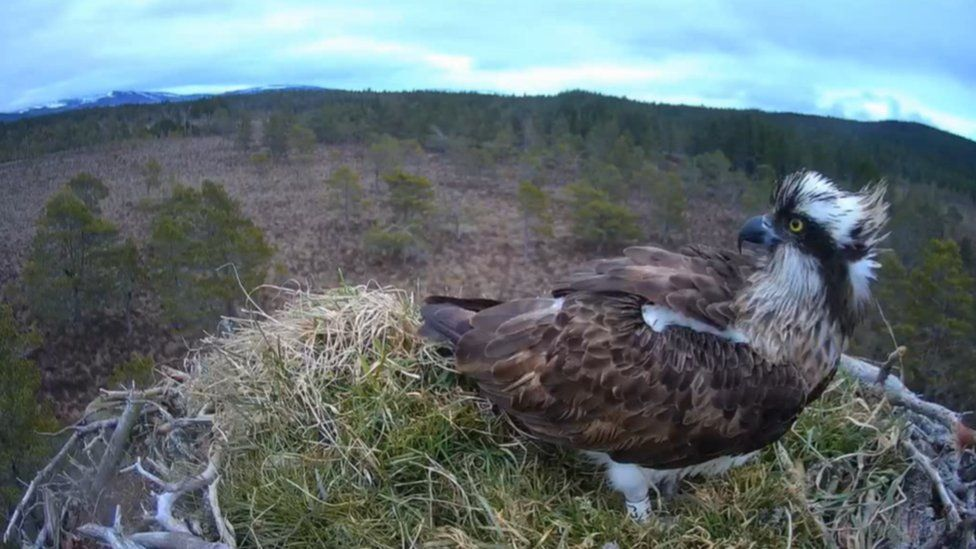 EJ at her nest on Wednesday