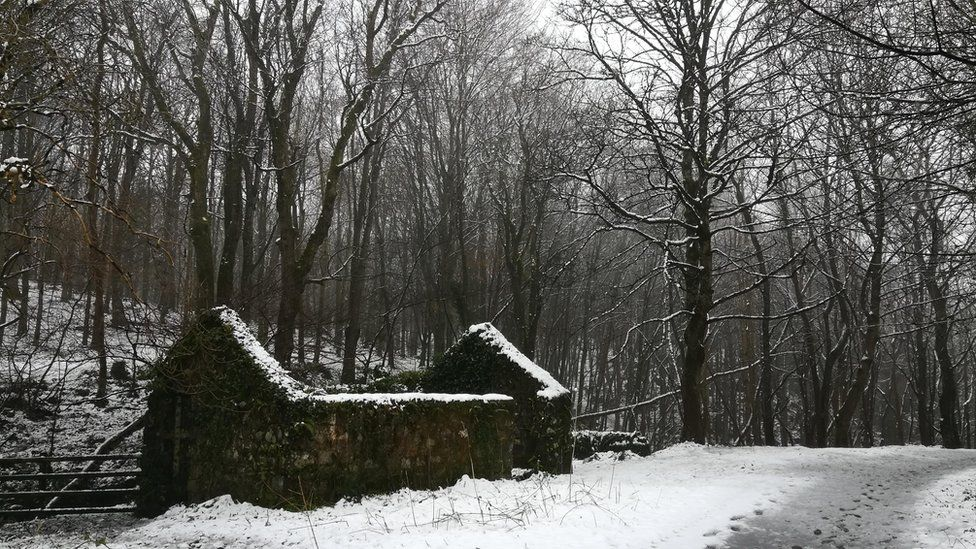 Snowy scene in Downhill Forest