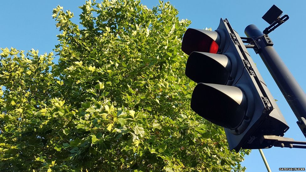 Traffic light and tree (Image: Oatsy40/Flickr)