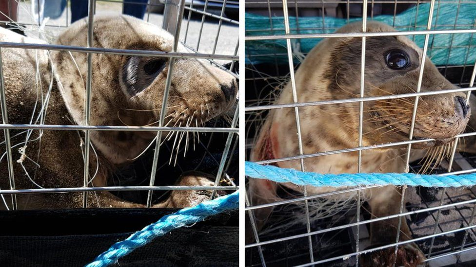 Seal in rescue cage with