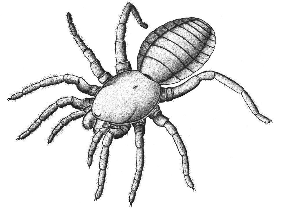 illustration of the creature