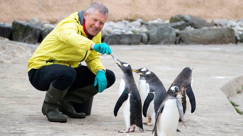 Willie Rennie feeds penguins at Edinburgh Zoo