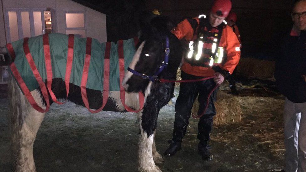 Horse covered in straps