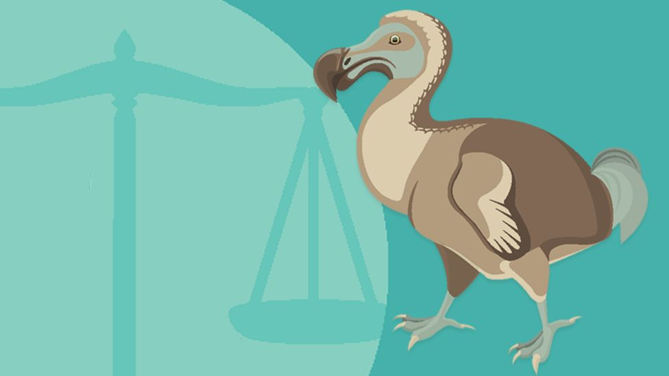 Graphic showing a dodo and scales of justice