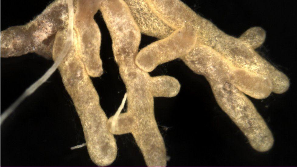 Fungi living on oak