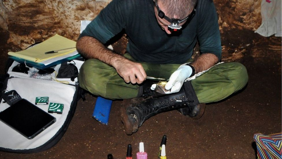 Un investigador pintando las uñas o garras de un murciélago para poder identificarlo