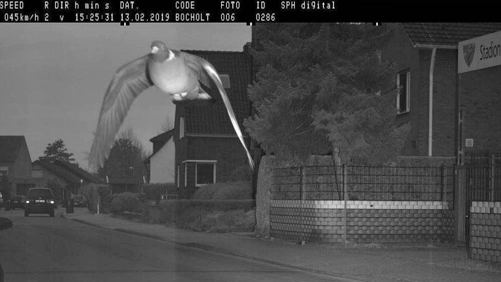 Pigeon caught on camera