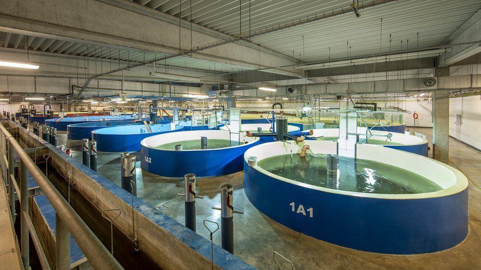 Tanks at at Aquamaof fish farm in Poland