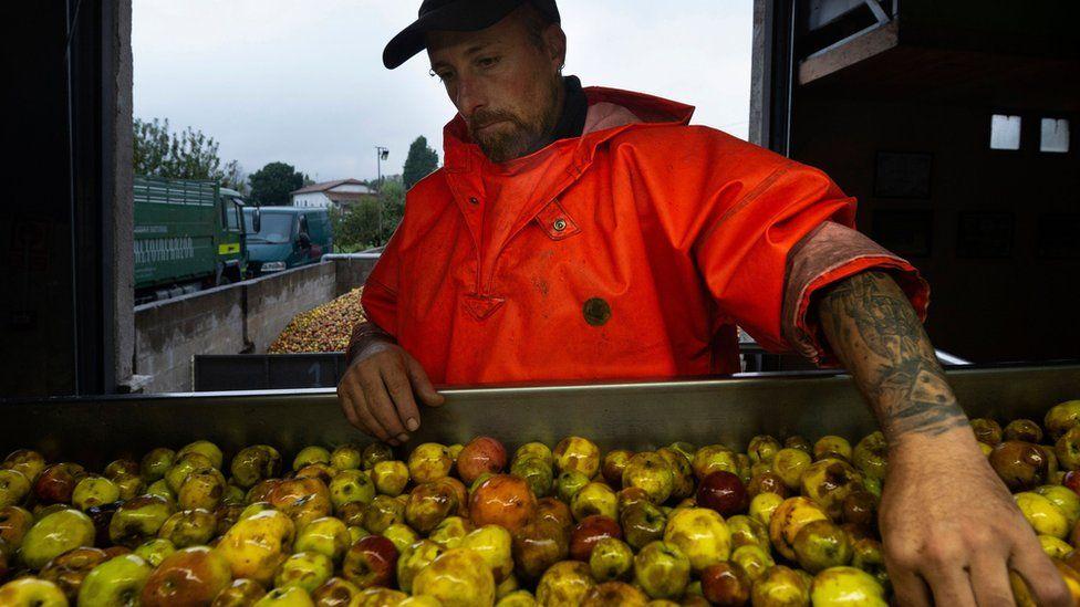 spain apple worker