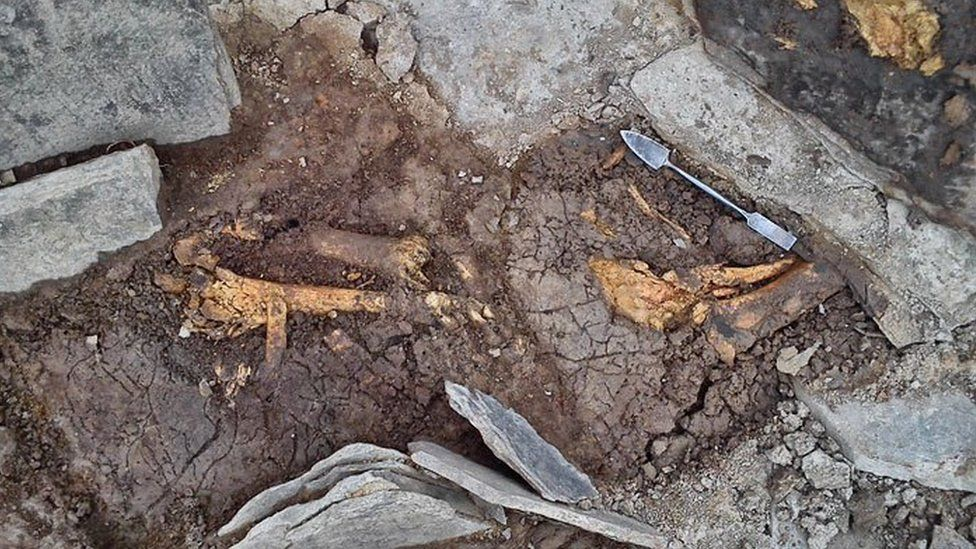 Animal bones at Ness Brodgar