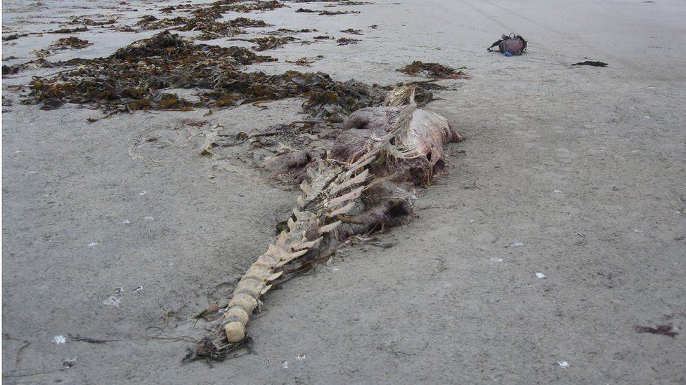 Scottish Marine Animal Stranding Scheme