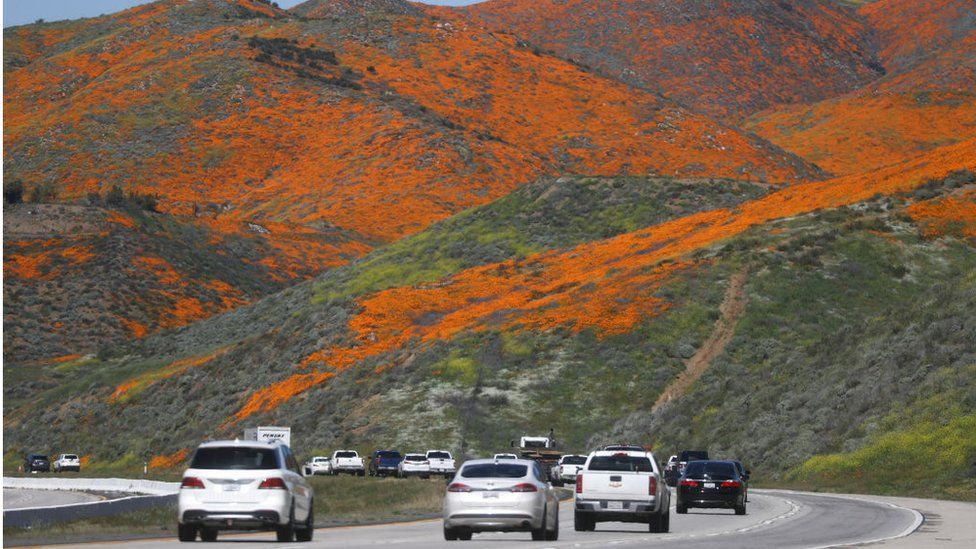 Cars travel on I-15 as a 'super bloom' of wild poppies blankets the hills of Walker Canyon