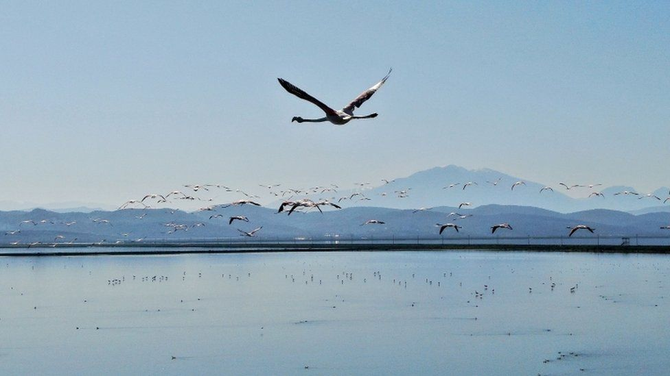 """""""It's time for love,"""" an environmental expert said about flamingos arriving in Albania to mate"""