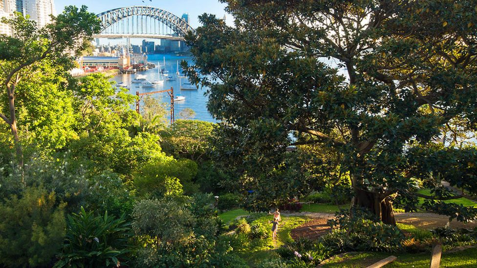 Wendy Whiteley The Famous Sydney Secret Garden Forged From Grief Bbc News