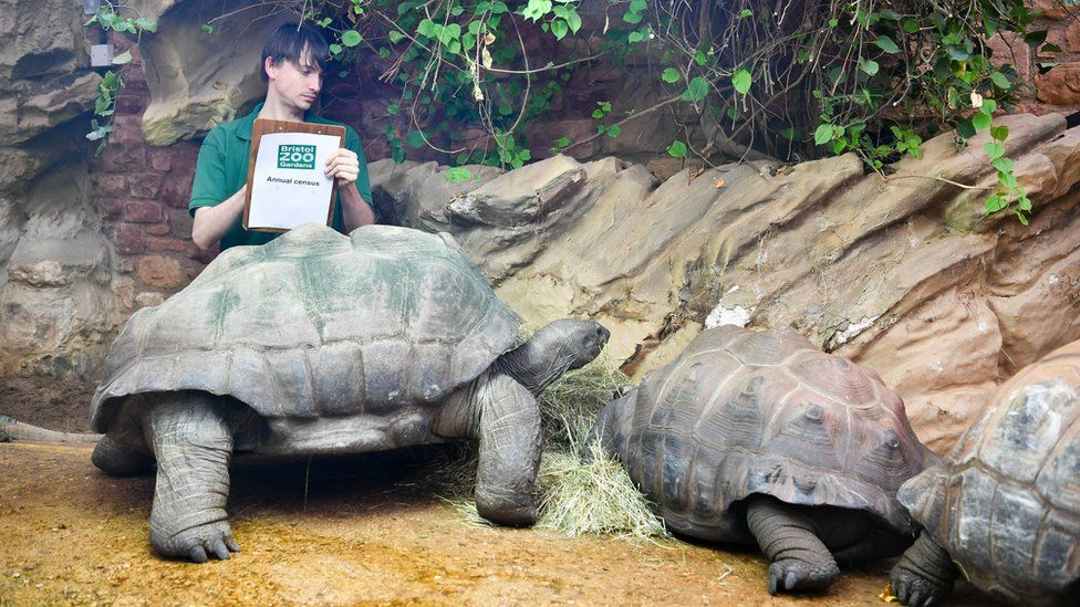 Giant tortoise numbers are ticked off
