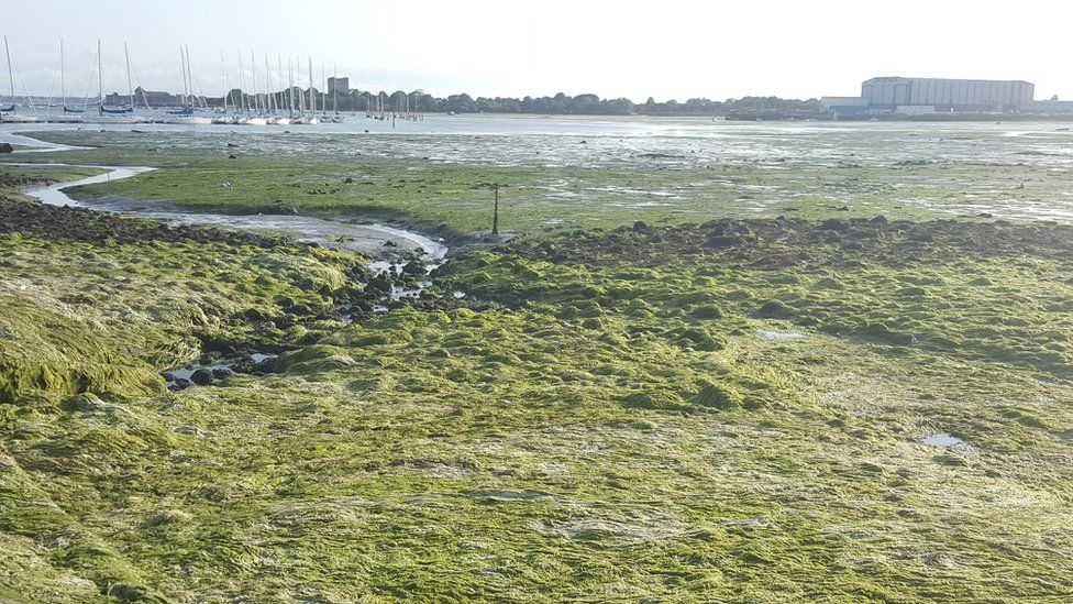 Oysters considered to cut Solent nitrate pollution