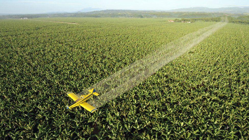 Crop duster flies over banana plantation