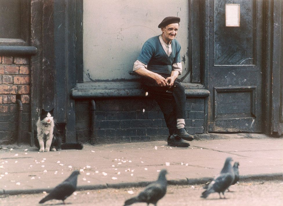An elderly man feeds pigeons in the street