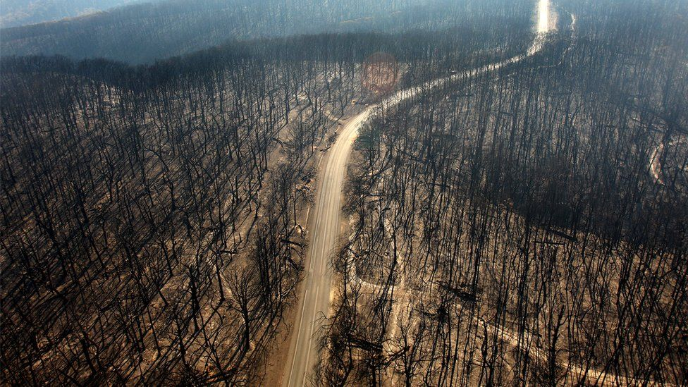 An aerial view of a road passing through a forest of burnt-out trees near Kinglake in Victoria, Australia