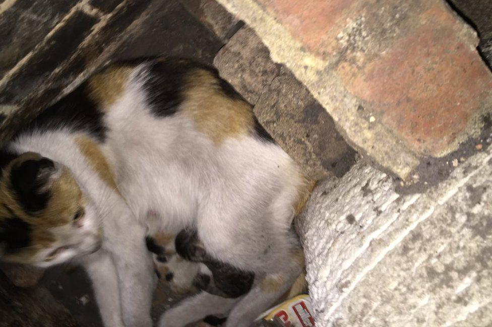 Binky the cat stuck in a fireplace