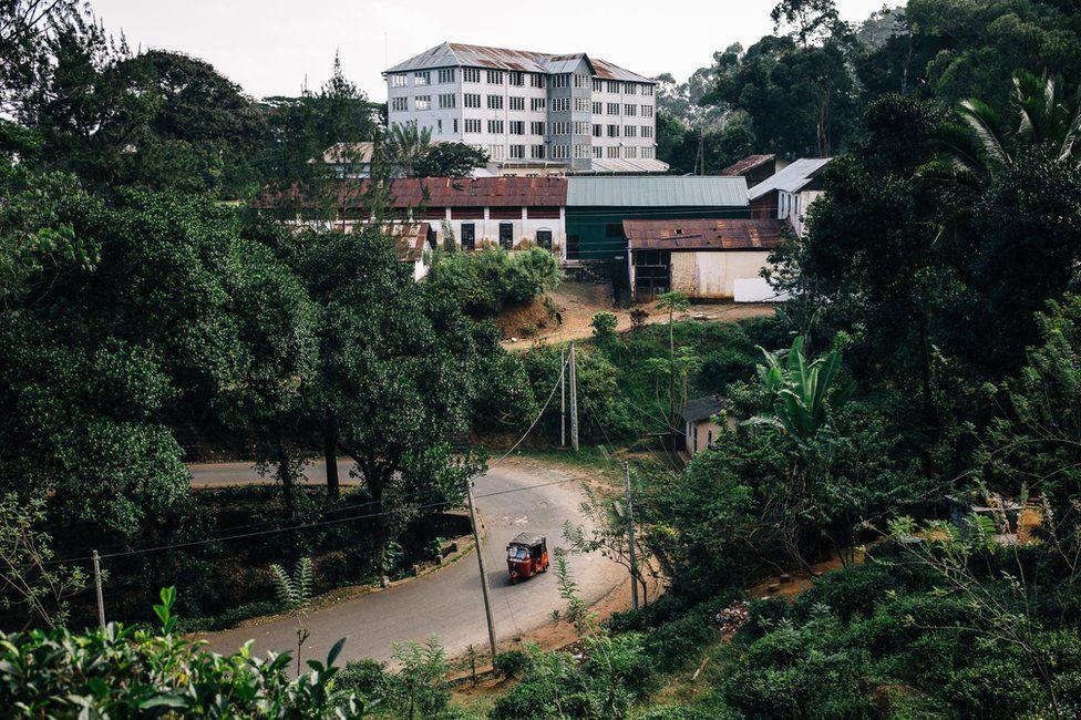 A view of a tea plantation factory