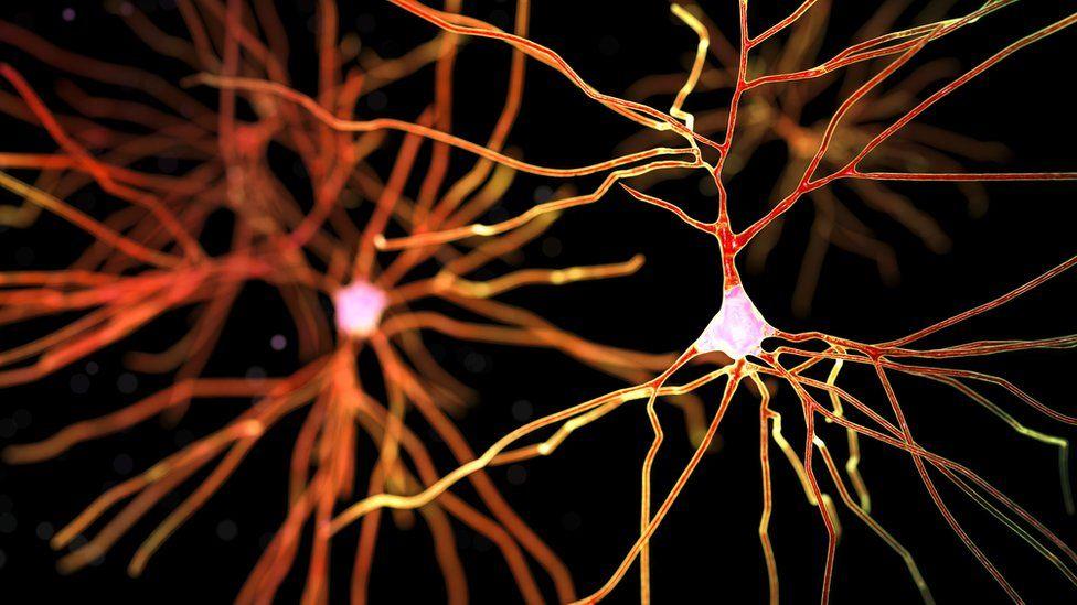 brain neurons