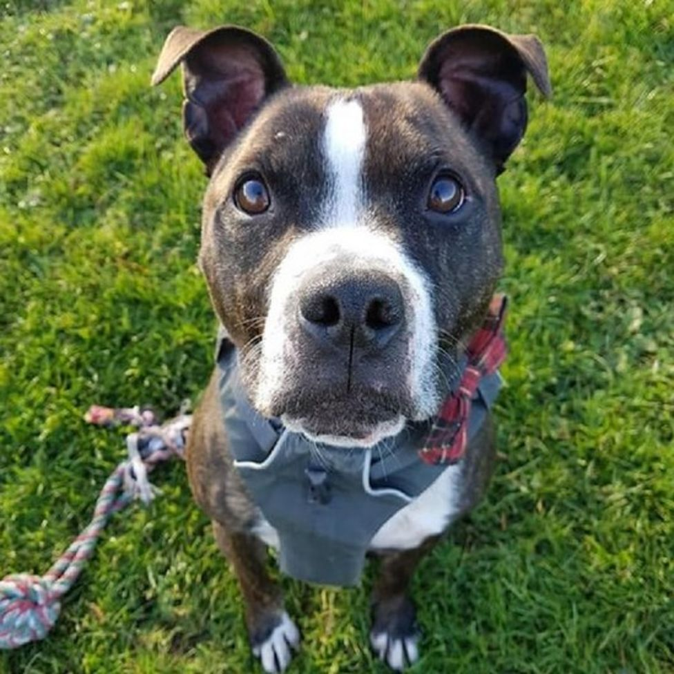 New home for dog after five years in Edinburgh animal shelter