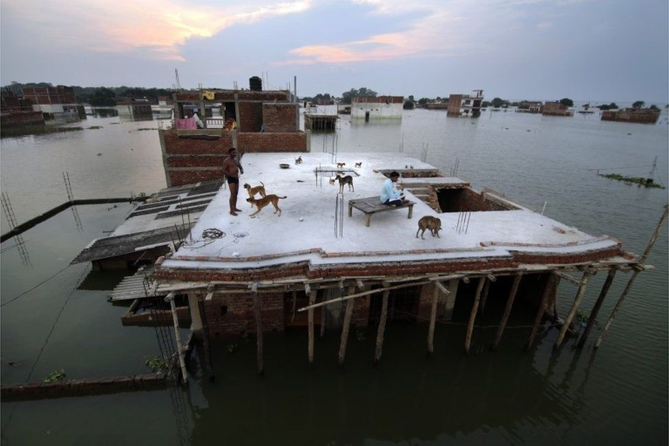 In this Thursday, Aug. 25, 2016 photo, a flood affected man, left, who rescued four dogs and their four puppies plays on the roof of their submerged house under construction in Allahabad, India.