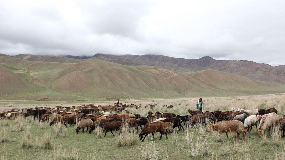Джайлоо в Кыргызстане