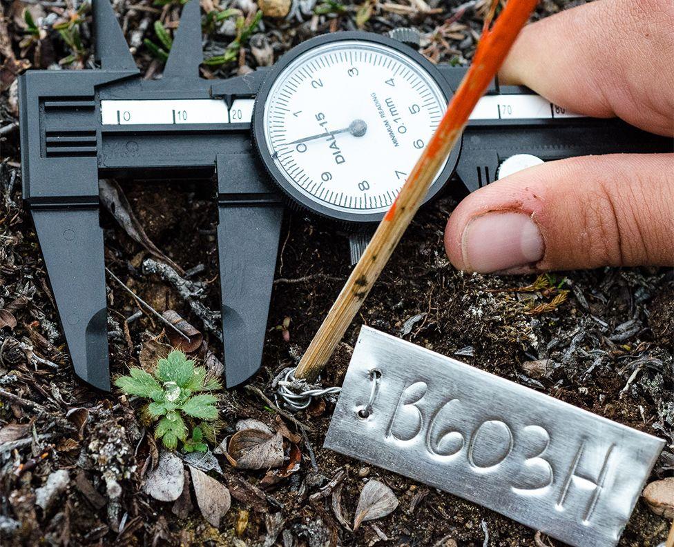 Measuring plant traits