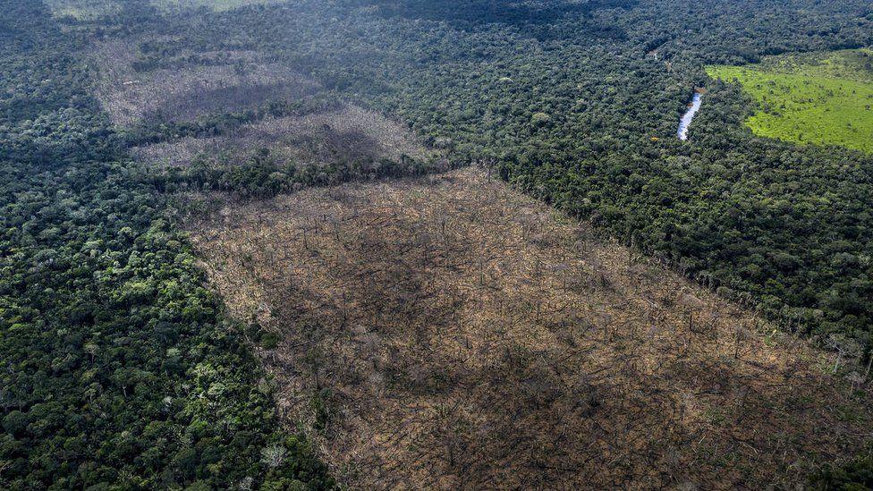 illegal deforestation found in Rondonia region of Brazil