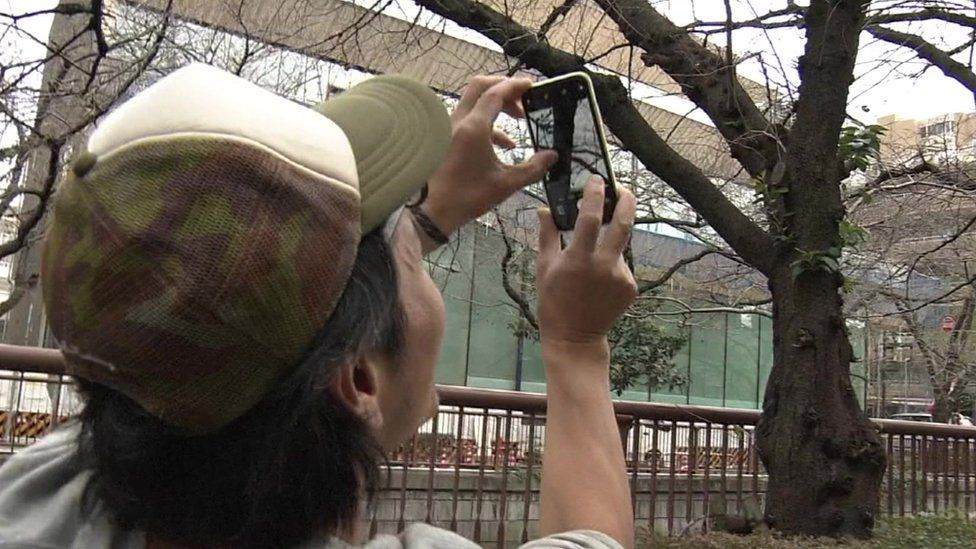 A man taking a picture of a tree on his phone