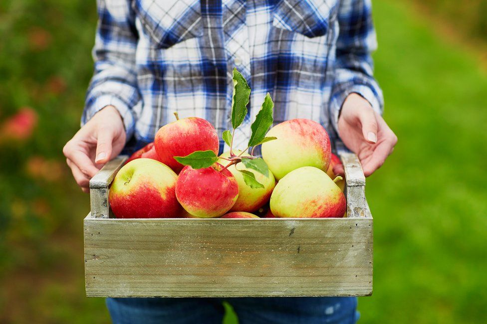 A woman holds a crate of apples