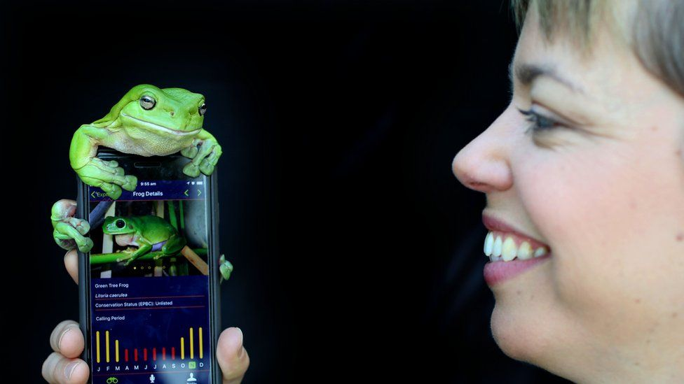 A frog on the FrogID app used by the Australian museum