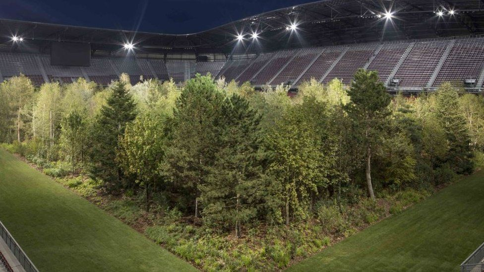 The forest lit up by night-time floodlights