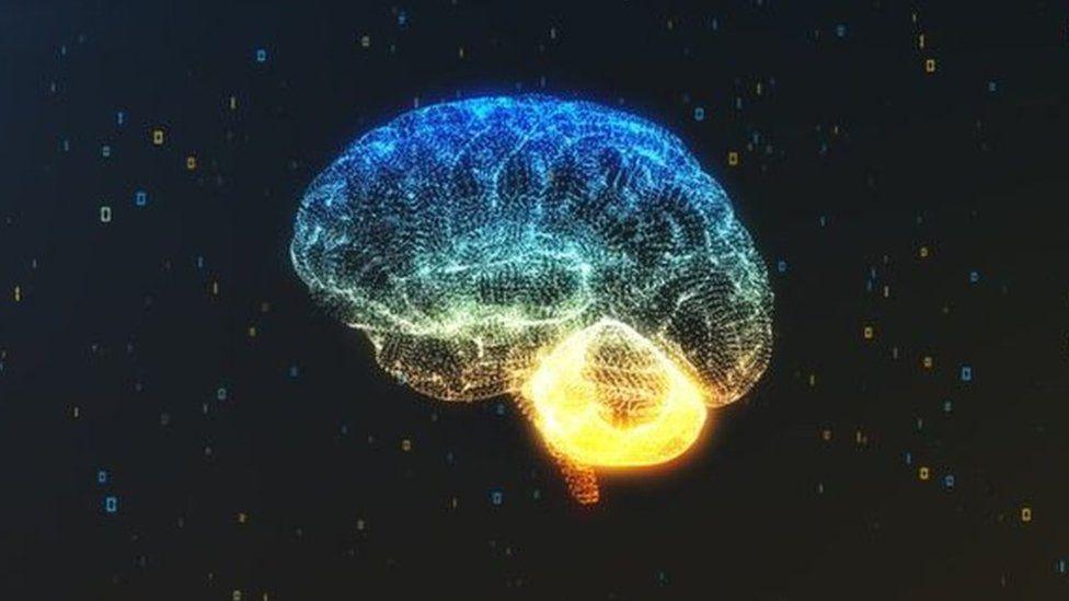 Image of the human brain