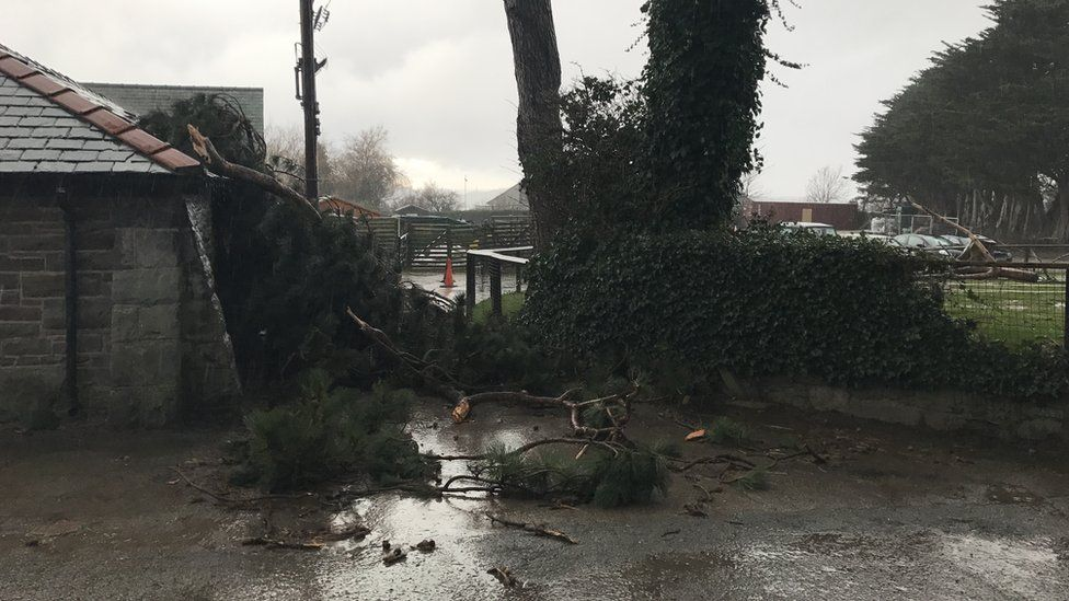 Storm damage at Welsh Mountain Zoo