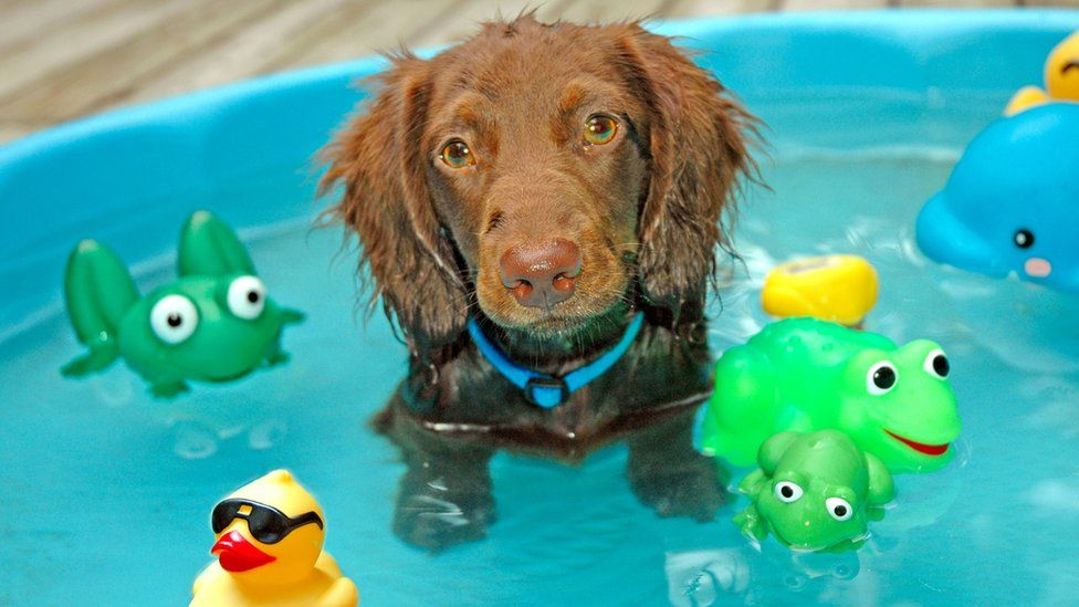 Dog in paddling pool