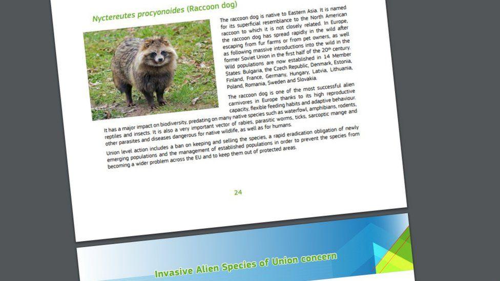 Invasive species list