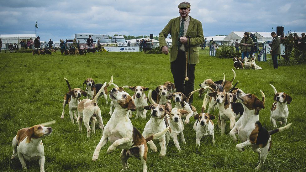 Hounds at Thame Country Fair