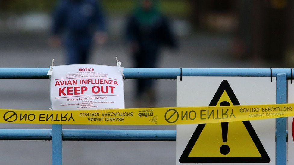 Avian influenza warning