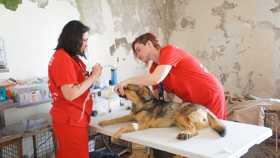 Ветеринари з собакою на столі