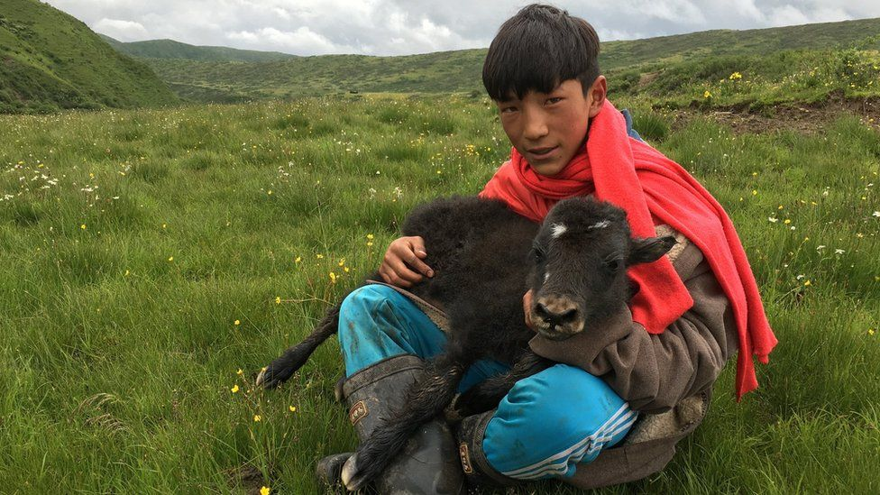 Tshe Bdag Skyabs's younger brother seated in a grass field with a baby yak in his lap