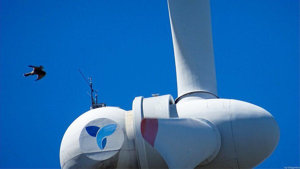 Bird flying alongside a wind turbine (Image: VIllageHero)