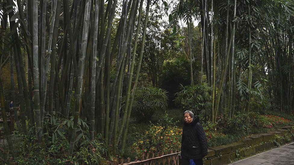 This photo taken on March 24, 2016 shows a woman walking past bamboo in a park dedicated to Tang Dynasty poet Du Fu, in Chengdu