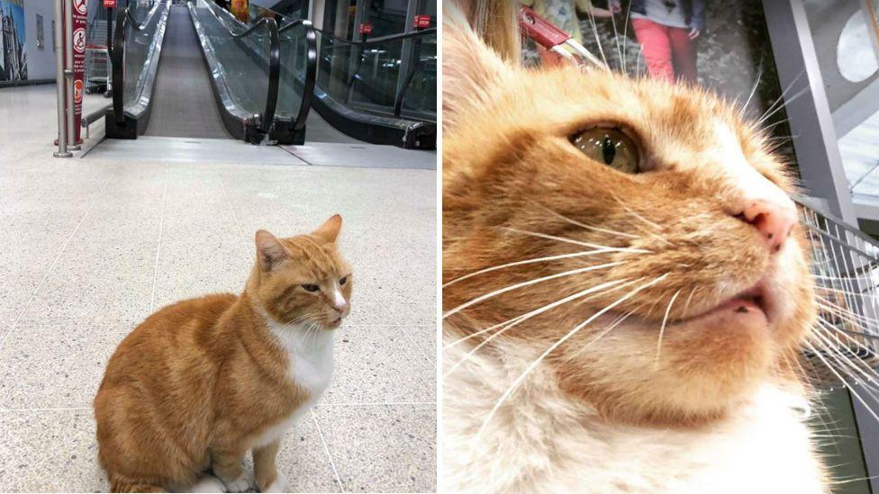 Garfield the cat in Sainsbury's