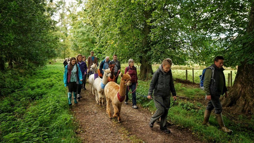 Had a fantastic morning on Sunday joining the Alpacas from Velvet Hall Alpacas at Traquair House, taking part in the Countryfile ramble in aid of Children in Need.