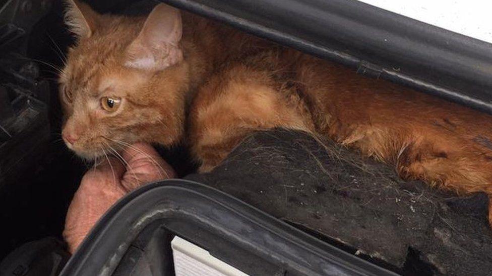 Cat stuck in car engine